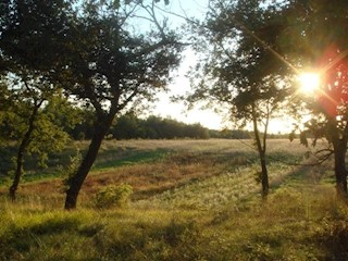 Land - Sale - ISTARSKA - KAŠTELIR - LABINCI - KAŠTELIR