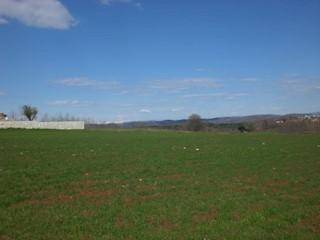 Land - Sale - ISTARSKA - VIŽINADA - VIŽINADA
