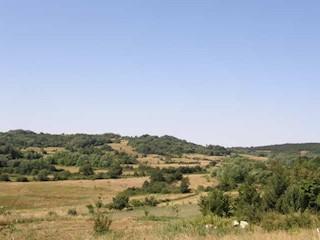 Land - Sale - ISTARSKA - MOTOVUN - MOTOVUN