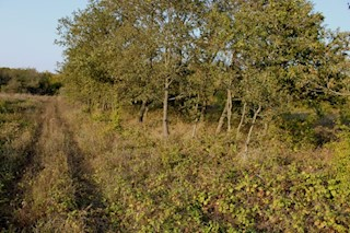 Land - Sale - ISTARSKA - POREČ - VALKARIN