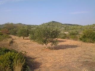 Land - Sale - ŠIBENSKO-KNINSKA - VODICE - TRIBUNJ