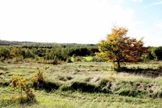 Land - Sale - ISTARSKA - POREČ - BADERNA