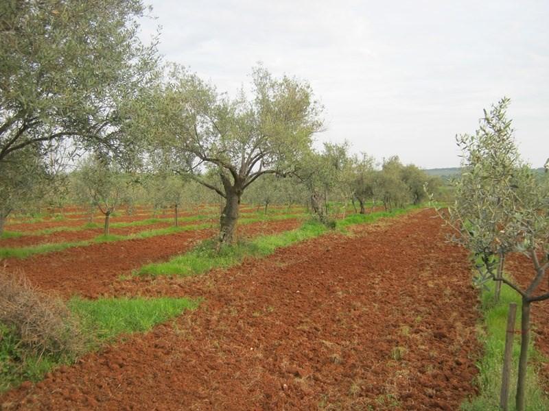 Купить участок в греции под сельское хозяйство