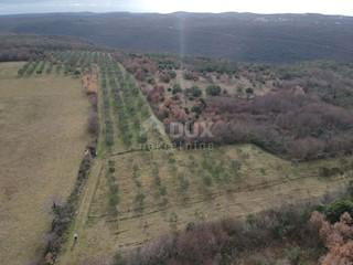 Terreno - Vendita - ISTARSKA - KANFANAR - JURAL